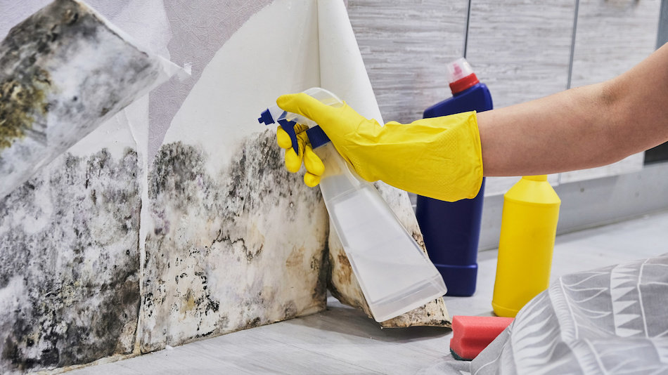 How to Eliminate mould from Your Home
